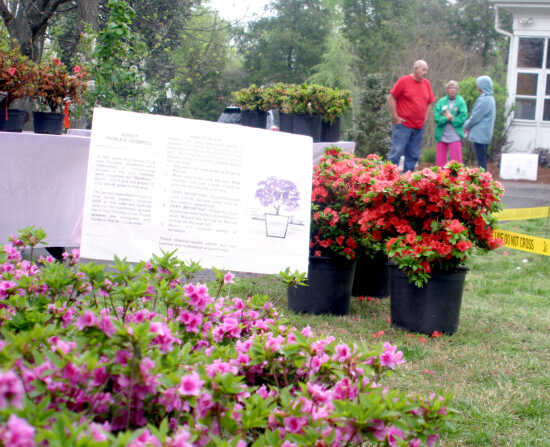 Dogwood-Azalea Festival flowers