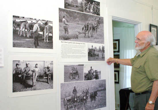 Mule photo exhibit will be on display in New Madrid