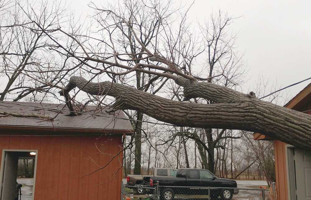Large tree falls on the roof